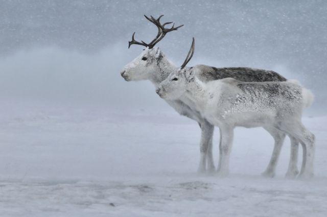 Lezing Nordic wildernis