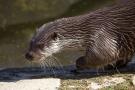 Olde Maten Big five De otter
