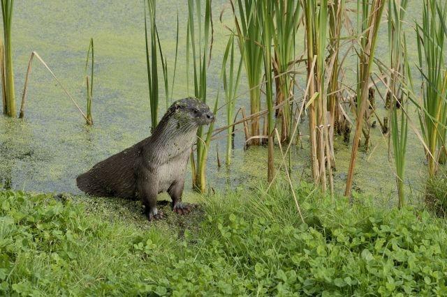 Kinderen zoeken naar glijbaan otter