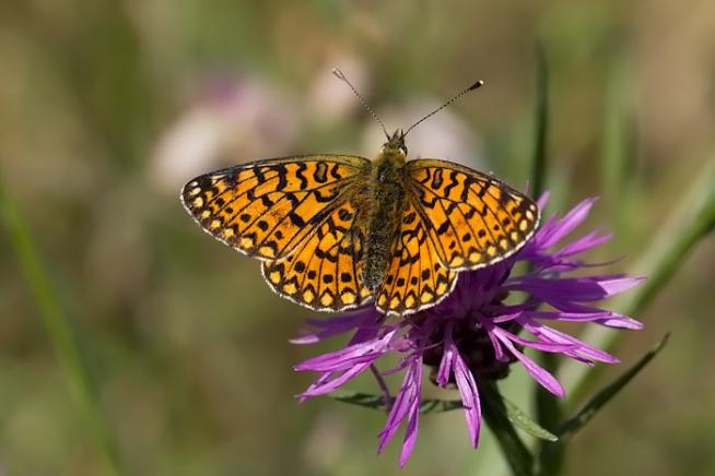 Excursie op zoek naar vlinders