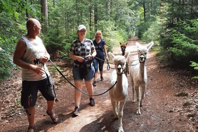 Alpacawandeling voor jong en oud