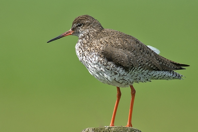 Vervalt voorlopig Lezing vogels in natuurgebied de Olde Maten